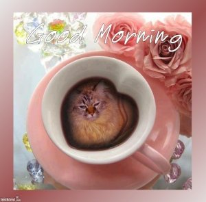 Good Meownin' tu you all. Hav a Pawsum day!!