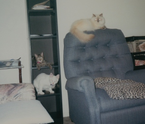 Dis is Devon and Lucky and Lexi hangin' out tugeddew.