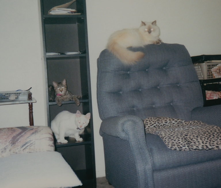 This is Devon and Lucky and Lexi hangin' out tugeddew.