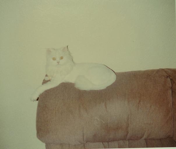 SHAD, Mommy's Original Service Cat
