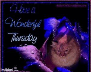 Hav a Wunnewful Purrsday Fursday!!!