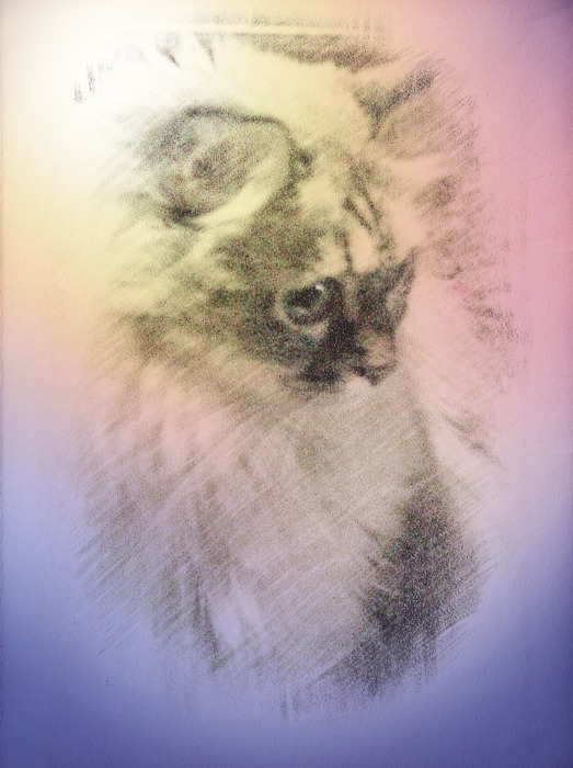 Meez colow sketch pictuwe.