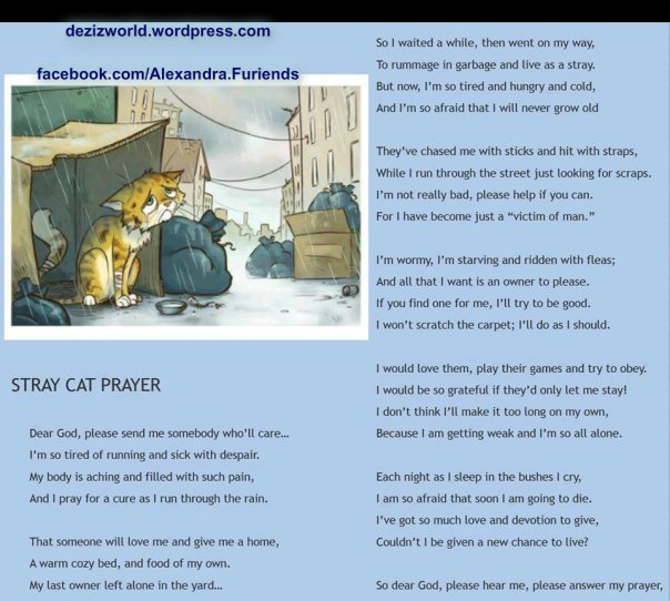 Stray Cat's Purrayer