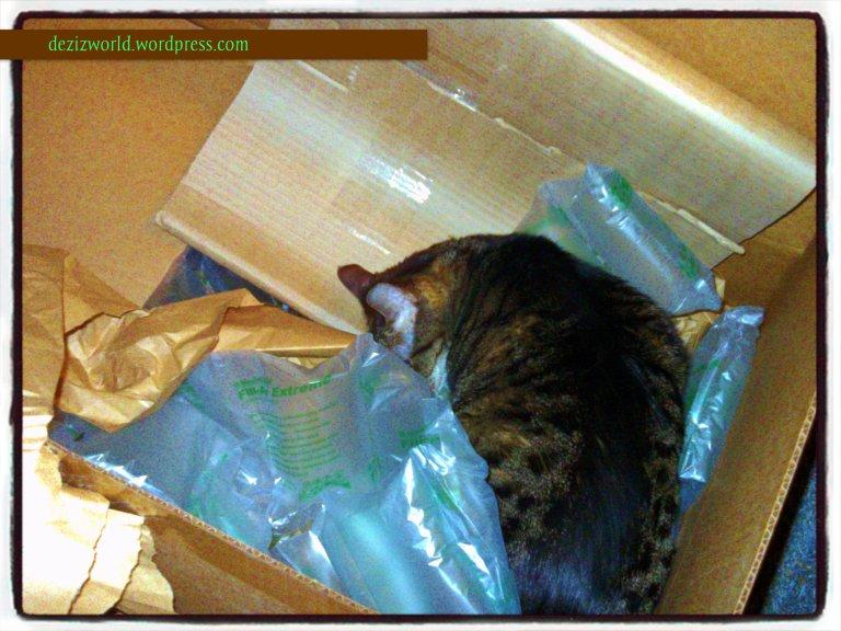 Dis box smells pawsum!!