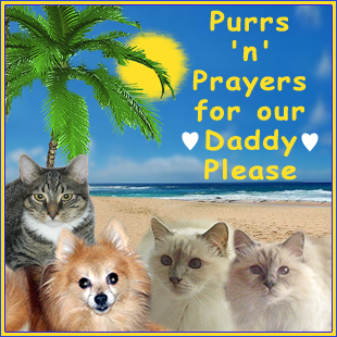 Purrs n Prayers for Daddy