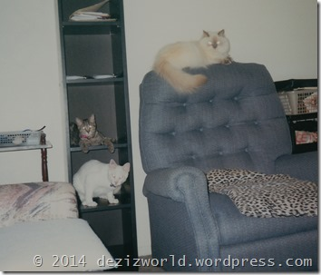 Devon, Lexi and Lucky