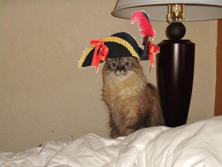 Dezi the pirate
