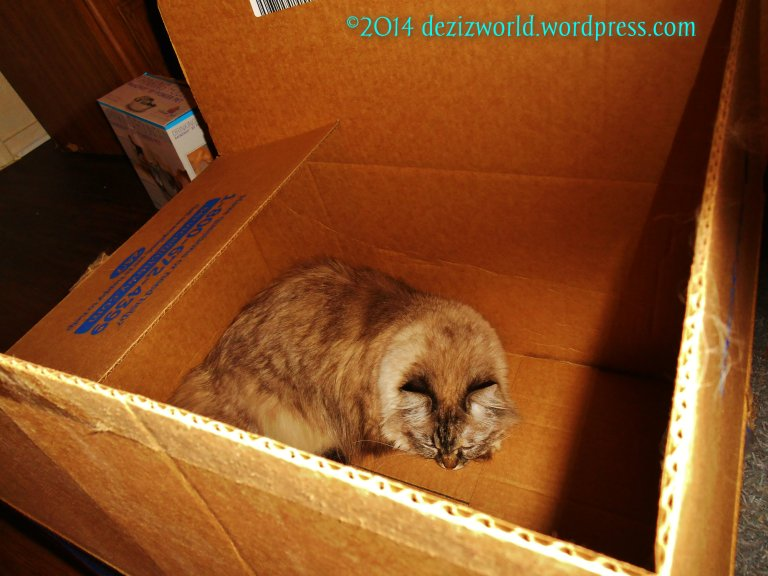Meez'll just lay in this box while mommy unpacks anudder.