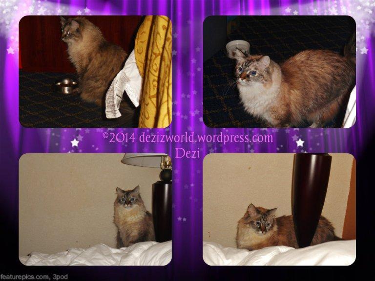 dw Dezi in motel collage 1
