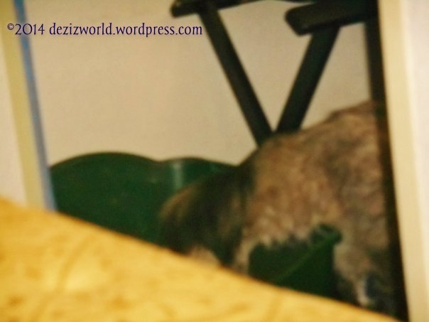 Yep yous seein' wight. Meez leavin' da pawdee box after usin' it. MOL
