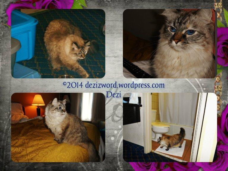 dw Dezi motel collage 2