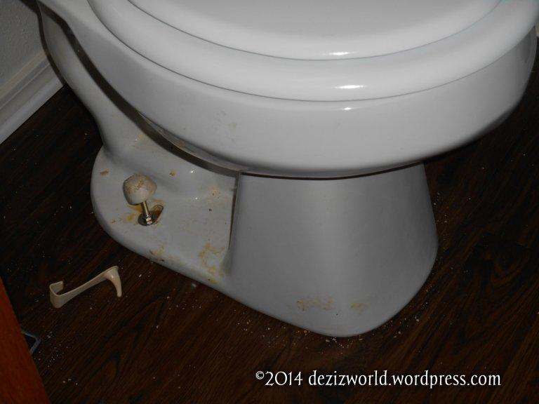 dw toilet