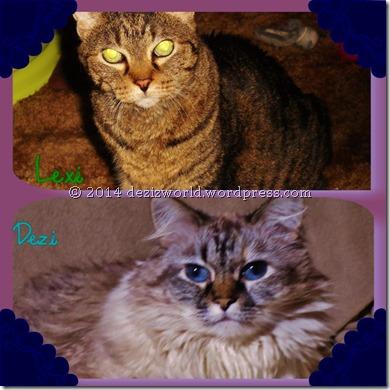 Lexi and Dezi named