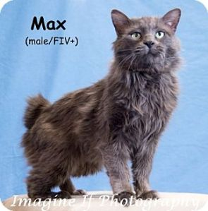 Paw Max's foto to find out mowe 'bout hims.