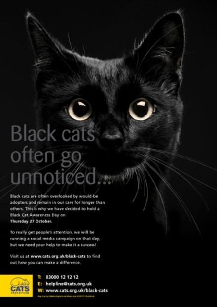 Black_Cat_poster