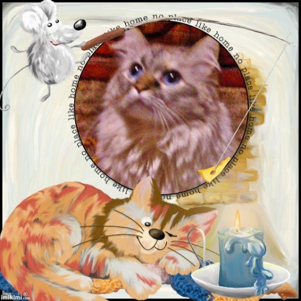 Dezi my cat..... - 2HEoW-1b4 - normal