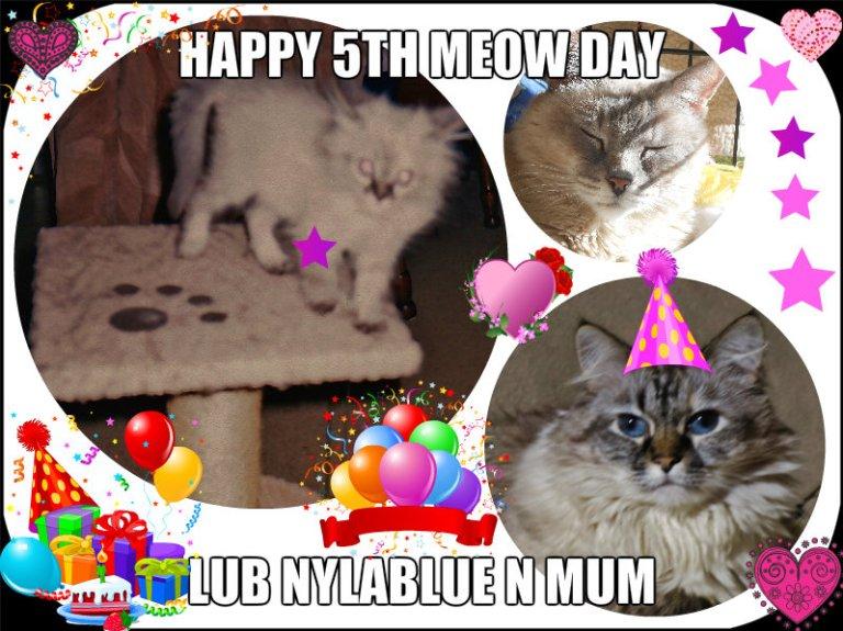 Dezi'z 5th Meow Day card frum NB  & SE