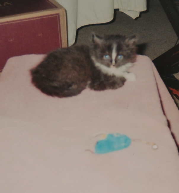This was baby Ransom when hims came to liv wiff mommy and sis Lexi.