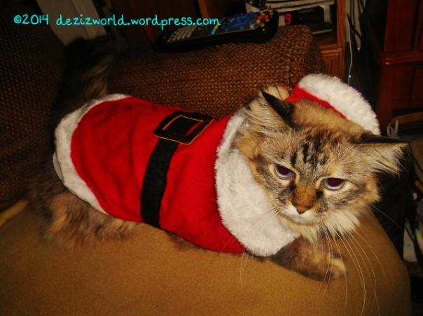 0dw Dezi as Santa hat