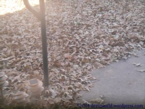 0dw leaves2