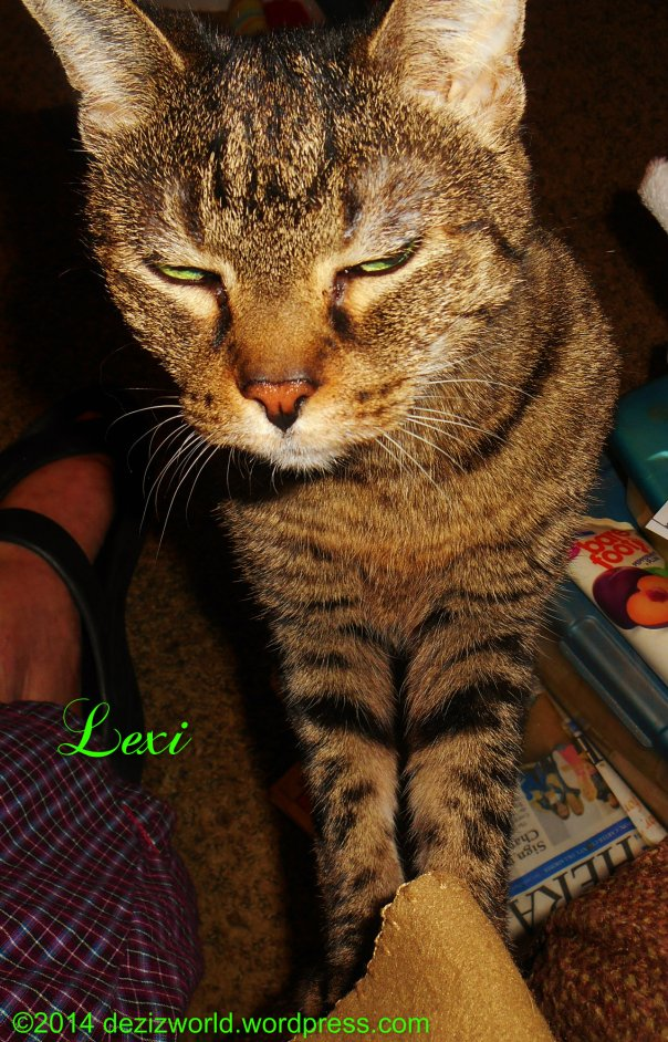 Sis Lexi be turkey beggin'. Dat means she's twyin; to get mommy to giv hers sum more of dat turkey off hers plate. MOL