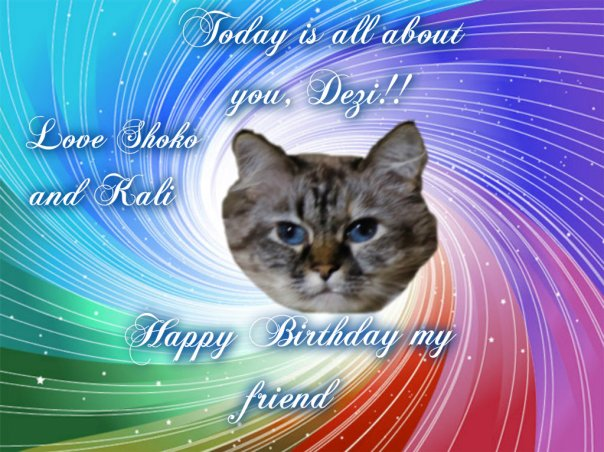 Fank you Shoko and Kali (The Canadian Cats)