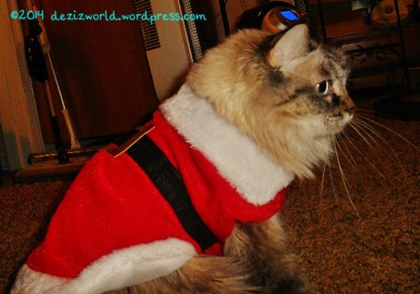 dw Dezi in Santa2