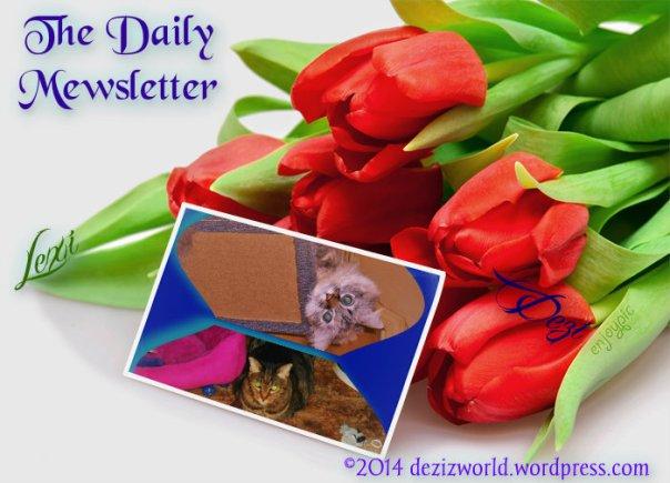 dw LnD Daily Mewsletter