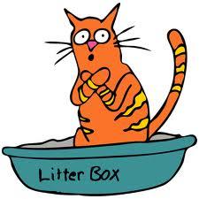 feline box scared