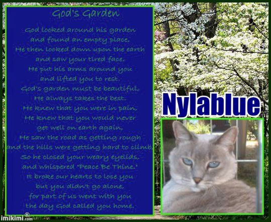 Nylablue in GOD'S GARDEN - 2HEoW-1cQ - normal