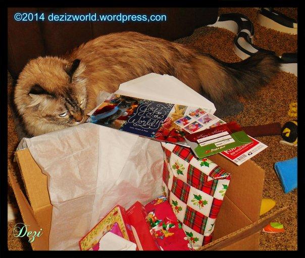 0dw Dezi Cat Scout Angel box