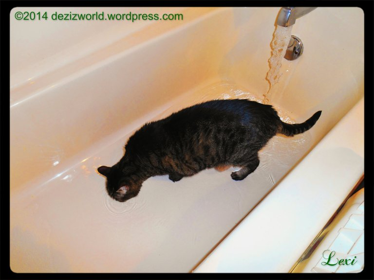 Mommy sez this be fur everypawdy dat doubts we like to play in da water. She wuz twyin' to get weady fur a shower when sis Lexi decided to jump in and get a dwink. MOL