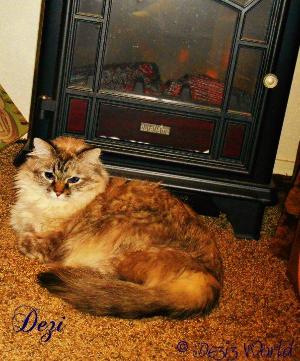 Meez gettin' warm by da  lectwic fire place