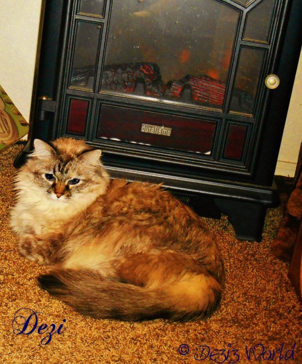 Meez gettin' warm by da  lectwic fire place
