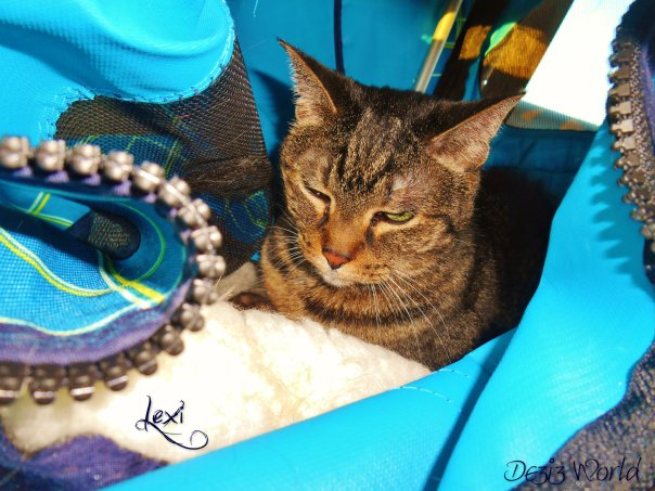 Hoep youz like minez foto, mommy neerlee droev us off da rode taykin' it. MOL