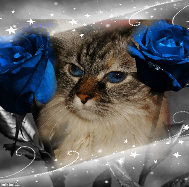 Dezi Winter,Rose,Blue - 2HEoW-1dv - normal