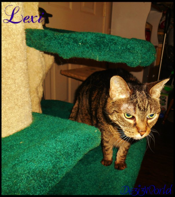 0dw Lexi on cat tree12