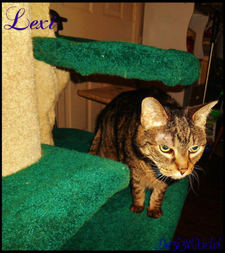 0dw Lexi on cat tree12