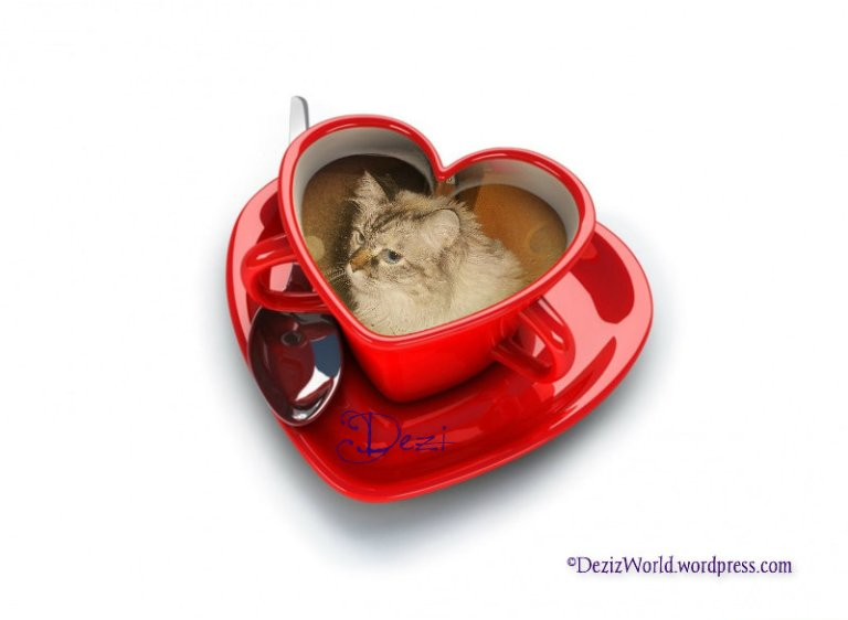 dw Dezi cup o coffee