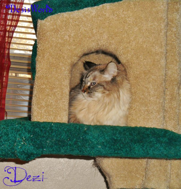 dw Dezi in tree house1