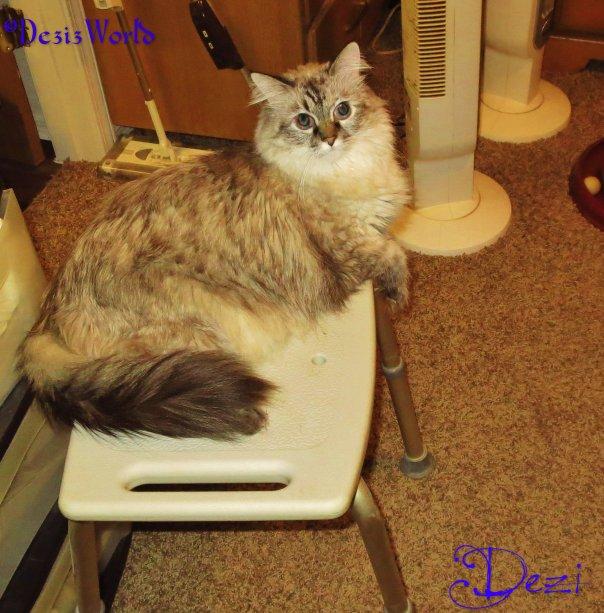 dw Dezi shower bench4