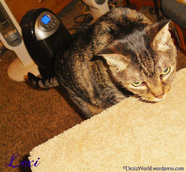 dw Lexi climbs steps