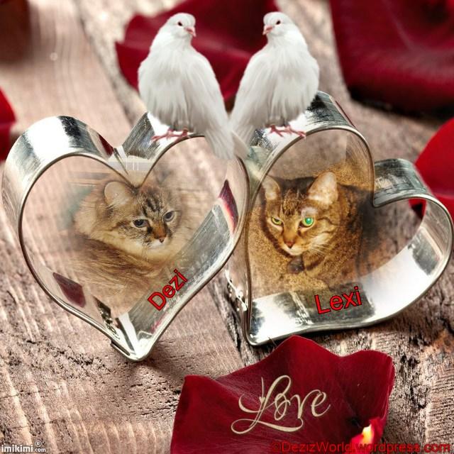 dwDL I love you - 2HEoW-1e0 - normal