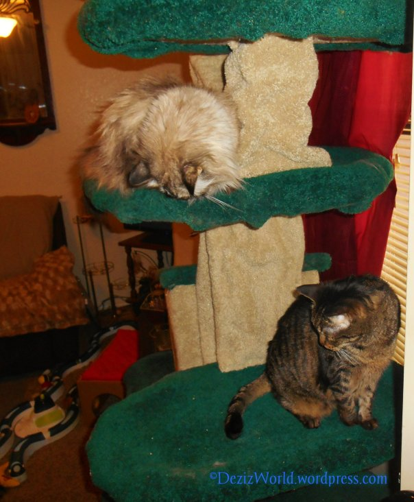 dw DnL cat tree65