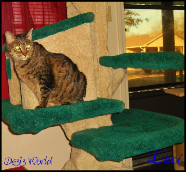0dw Lexi cat tree2