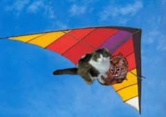 AD hang glide