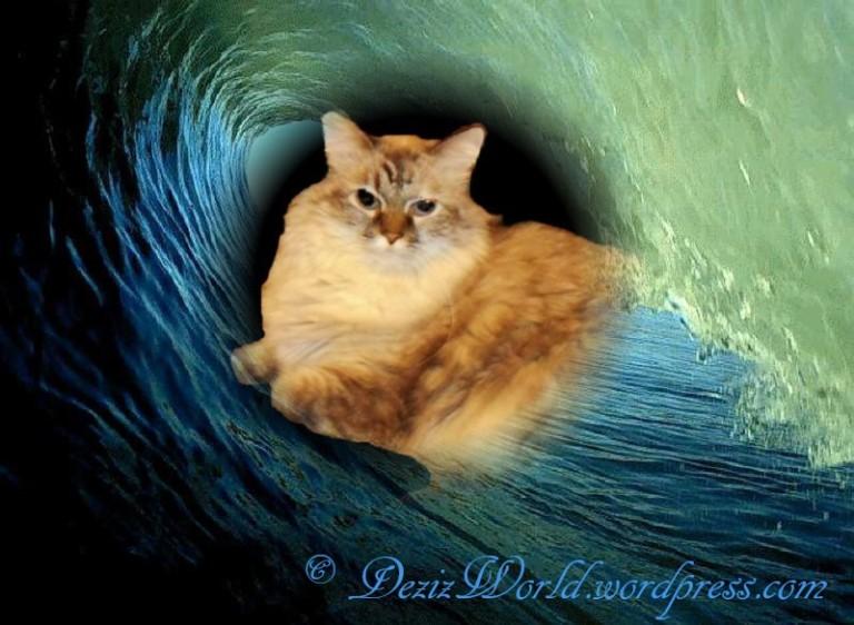 dw Dezi in wave
