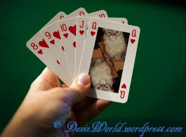 dw Dezi queen of hearts