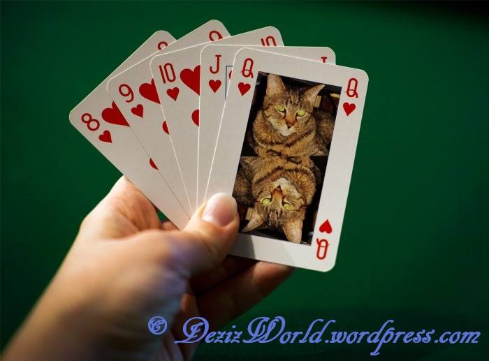 dw Lexi queen of hearts