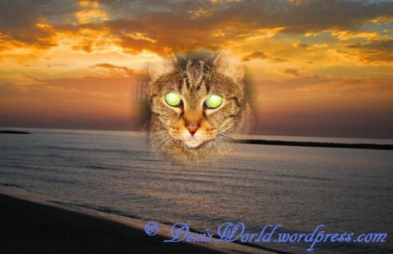 dw Lexi sunrise